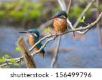 male and female common...   Shutterstock . vector #156499796