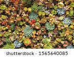 many species of fresh succulent ... | Shutterstock . vector #1565640085