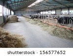 A Large Hangar With Cows On Th...
