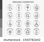 organic cosmetics set of thin... | Shutterstock .eps vector #1565782642
