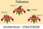 Diagram Showing Pollination...