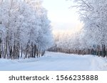 Winter Forest Road. Trees...