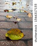 Small photo of Wet leaves on wet surface of pathway.