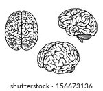 human brain in three planes for ...