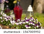White And Purple Flowers In The ...