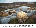 A panoramic view of the Paramo de Santurban with its lagoons, hill and frailejones. This Paramo one of the biggest of Colombia located in Santander and Norte de Santander