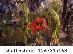 Flowers In The Aquarium With...