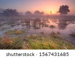 Sunrise Over The Wetland Of Th...