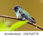violet headed hummingbird ... | Shutterstock . vector #156763775