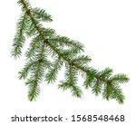 Spruce  Fir  Pine Or Christmas...