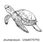 water turtle sketch. hand drawn ... | Shutterstock .eps vector #1568575792