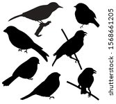 Set Of Silhouettes Of Birds...