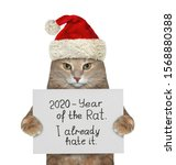 The Beige Cat In The Red Santa...