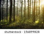 Stock photo beautiful sunset in the woods 156899828