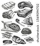 raw meat vector drawing set.... | Shutterstock .eps vector #1569094702