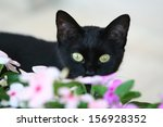 Stock photo black cat 156928352
