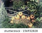 Pumpkins  Chrysanthemums  And...
