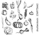 hand drawn vegetables set   Shutterstock .eps vector #156975662