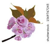 sakura branch  vector... | Shutterstock .eps vector #1569767245