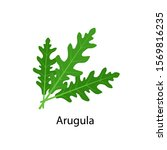 arugula spice   vector... | Shutterstock .eps vector #1569816235