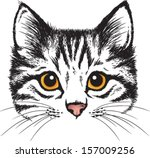 Stock vector vector sketch of a stylized kitten s face 157009256