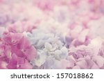 Pink Hydrangea Flowers With...