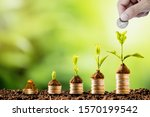 plant glowing on coins stacking ...   Shutterstock . vector #1570199542
