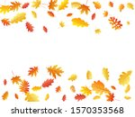 oak  maple  wild ash rowan... | Shutterstock .eps vector #1570353568