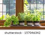 herbs in plant pots growing on... | Shutterstock . vector #157046342
