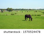 Grazing Horses On The Green...