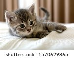 Cute tabby kitten lies on white ...