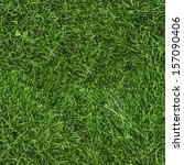 Green Grass Seamless Texture....