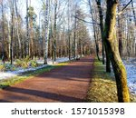 Autumn Forest Road First Snow....