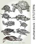 Hand Drawn Turtle Vector Set