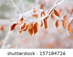 Frozen Leaves On The Branch...