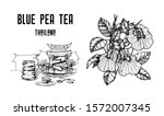 blue pea tea vector... | Shutterstock .eps vector #1572007345