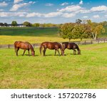 horses at horse farm. country... | Shutterstock . vector #157202786