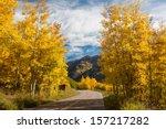 aspen trees in full fall color... | Shutterstock . vector #157217282