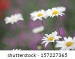 chamomile flower | Shutterstock . vector #157227365