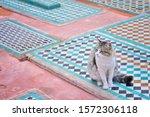 Cat On The Saadian Tombs ...