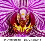 Beautiful Purple Orchid Flower  ...