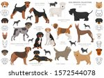 Hunting Dogs Collection...