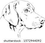 Pedigree Dog Drawn In Ink By...