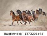 Horse Herd Run Free On Desert...
