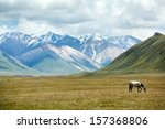 grazing horse in mountain... | Shutterstock . vector #157368806