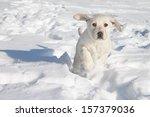 Winter Labrador Retriever Pupp...