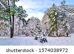 Winter snow forest landscape....