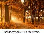 golden sunbeams of autumn on a...   Shutterstock . vector #157503956