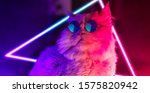 Lucifer The Cat In A Neon...