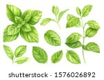 Fresh Mint Leaves And Stems...